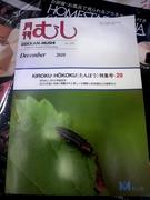 虫.JPG